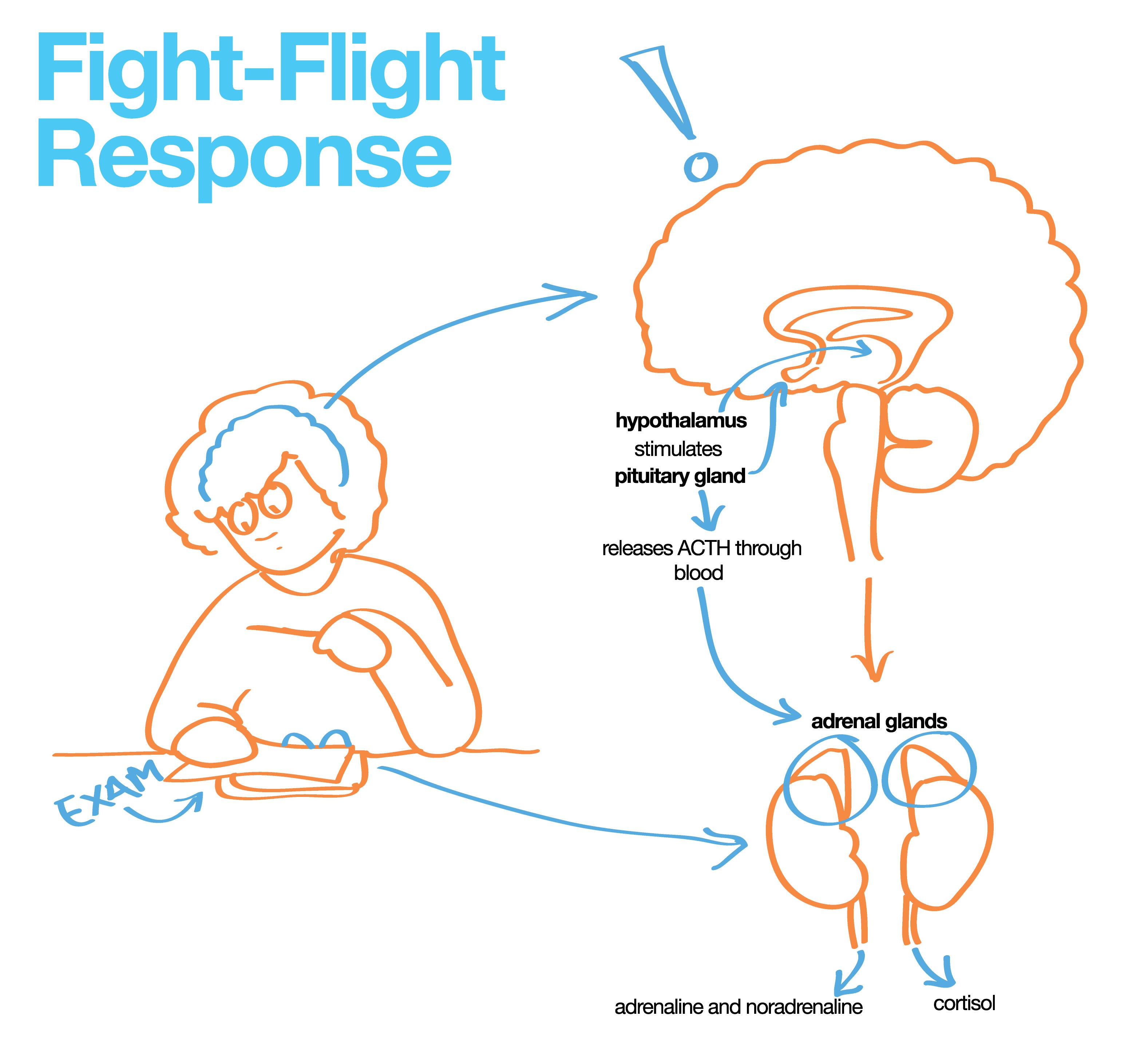 Our Responses To Stress | Stress, No response, Behavioral ...