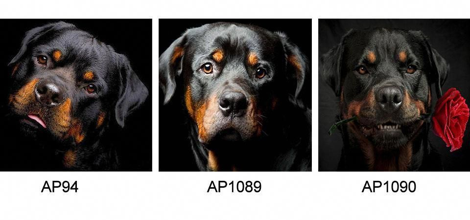 More About The Rottweiler Puppy Size Rottweilerbreed Rottweilerx