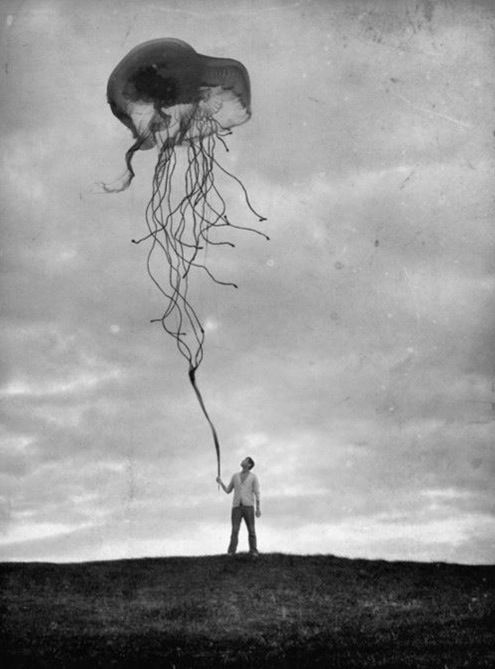 Jellyfish Kite