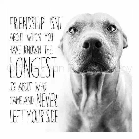 Friendship Isnu0027t About Whom You Have Known The Longest, Itu0027s About Who  Came. Pit Bull QuotesDog ...
