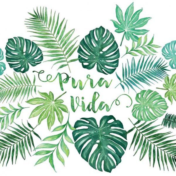 Pura vida sticker palm leaves and monstera watercolor de la pura vida tropical vibestropical
