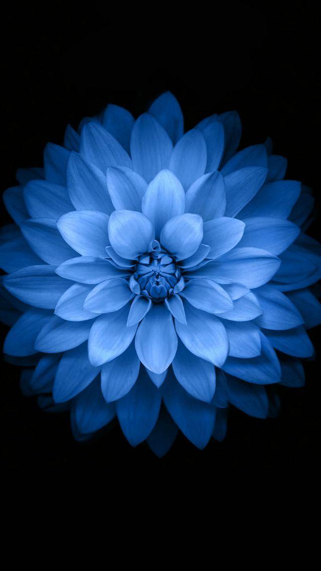 Blue Lotus IOS 8 Pattern Art IPhone 5s Wallpaper