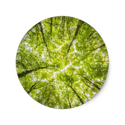 Beautiful green forest tree classic round sticker round stickers
