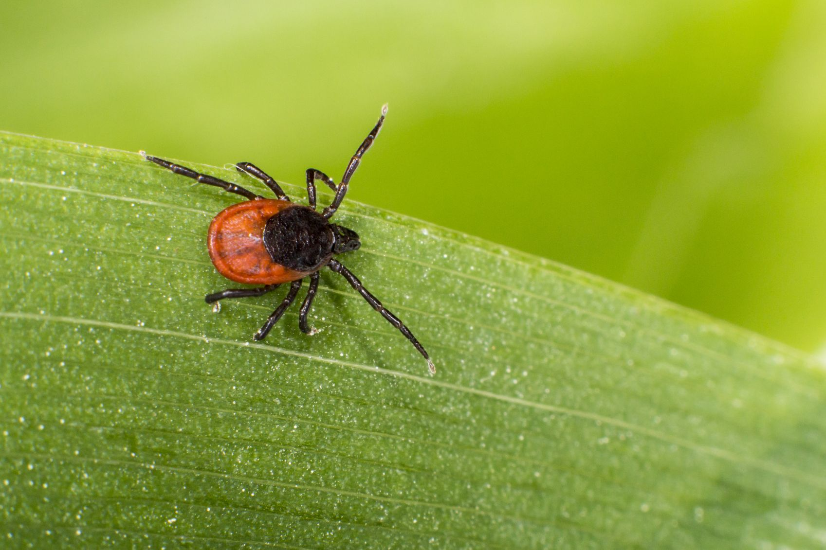 Summertime and the outdoor livin' is easy...except for some pesky little buggers. Get pro tips on tick prevention and removal from a doctor.