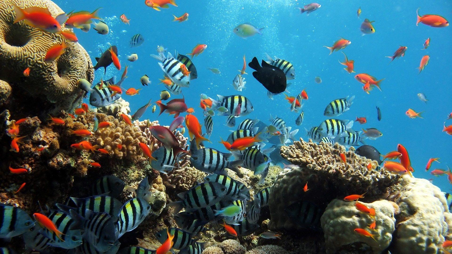 Underwater Hd Widescreen Wallpapers