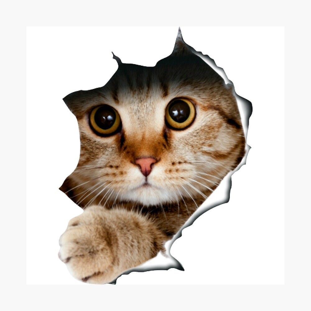 Get My Art Printed On Awesome Products Support Me At Redbubble Rbandme Https Www Redbubble Com I Photographic Print In 2020 Wall Stickers Cats Beautiful Cat Pets