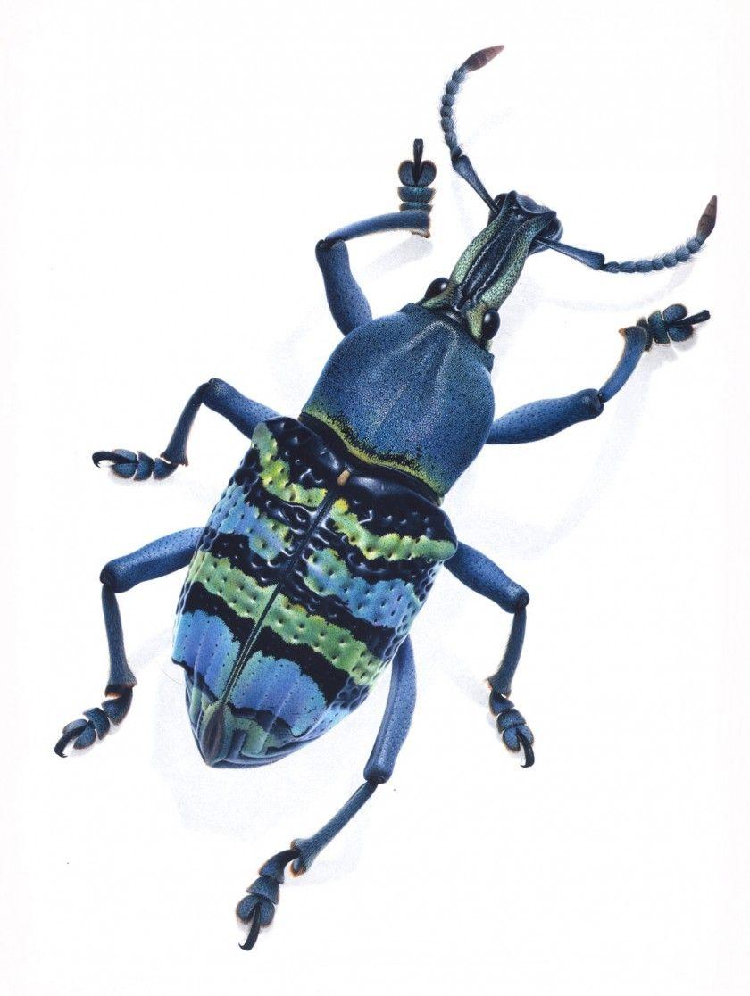 картинка синего жука пользователя