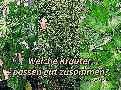 Photo of Kräuter pflanzen: Welche Kräuter passen gut zusammen?