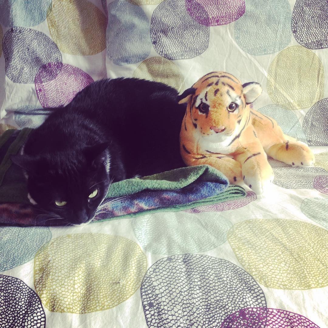 Tigre e Pantera... my shot  #cat #catsofinstagram #cats #catstagram #catlover #gatto #family #famiglia #fun #funny #igers #igdaily #instafun #instalike #instacat