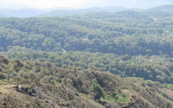 какие леса занимают