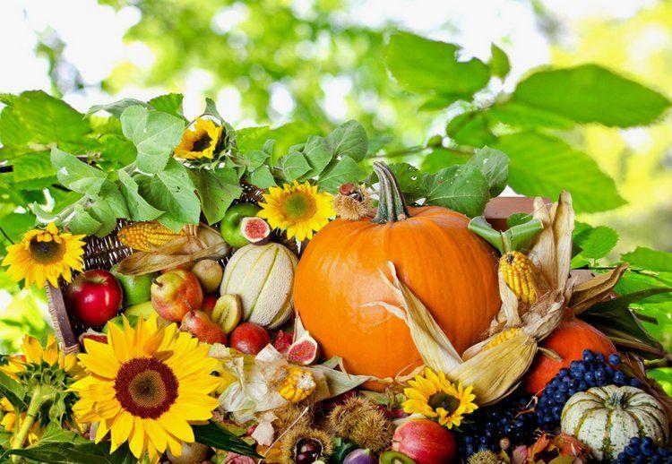 40 Cute Thanksgiving Wallpaper Hd For Desktop Backgrounds Thanksgiving Wallpaper Happy Thanksgiving Wallpaper Fruit Wallpaper