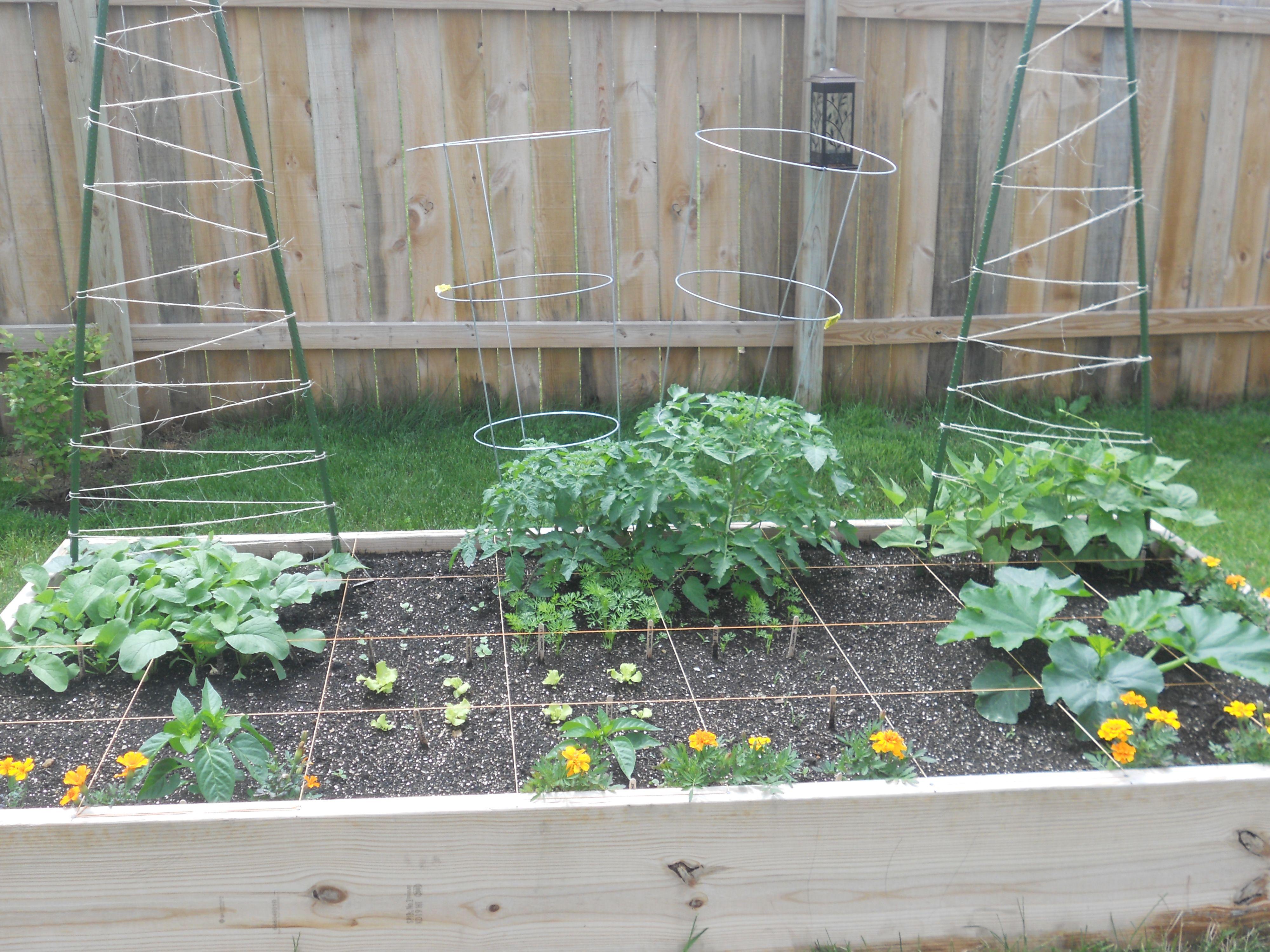My First Square Foot Garden 2013 Vegetable Garden Ideas