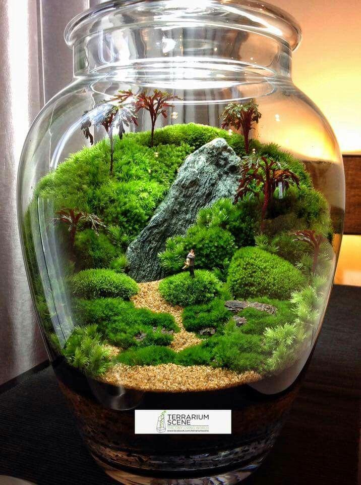 mahmut k rn k 582 terrarium pinterest terraria gardens and plants. Black Bedroom Furniture Sets. Home Design Ideas
