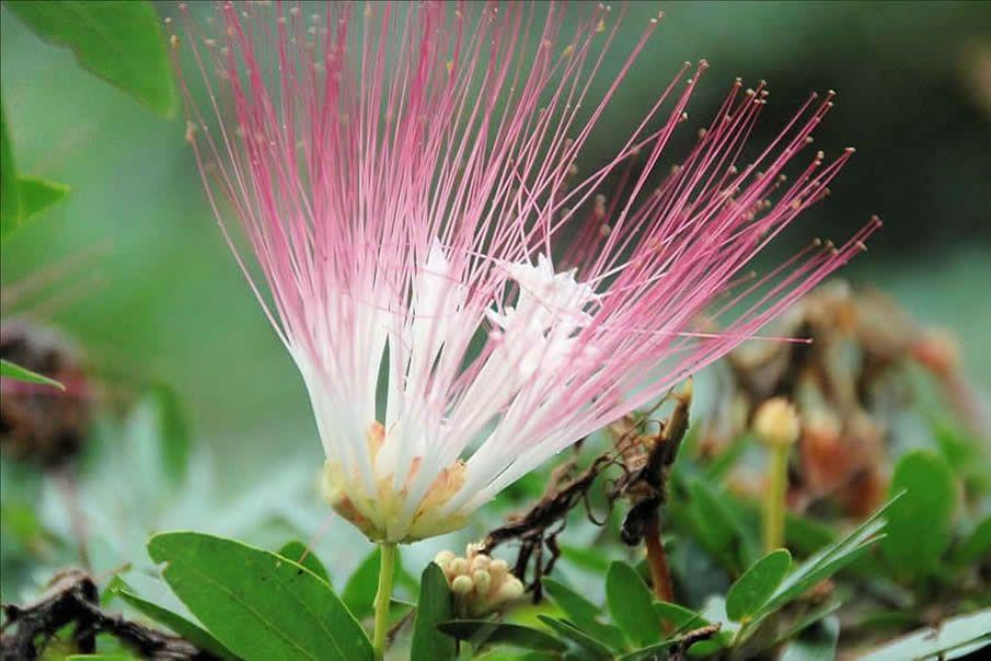 amazon rainforest plants and names. amazon flower rainforest plants and names