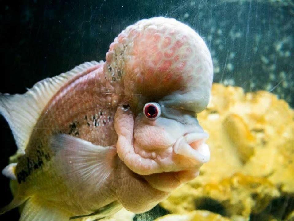 Смешная картинка про рыбу