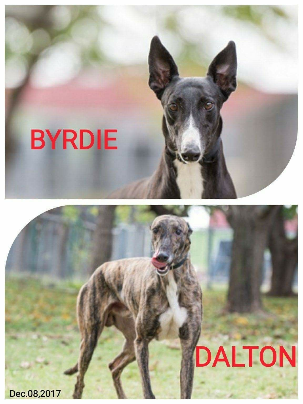 Byrdie 2 yrs old and dalton 4 yrs old are arrivals from