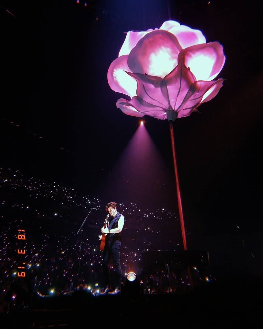 Image result for shawn mendes rose concert