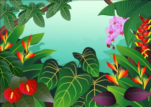 Vectores De La Selva Animales Plantas Y Mas Selva Dibujo