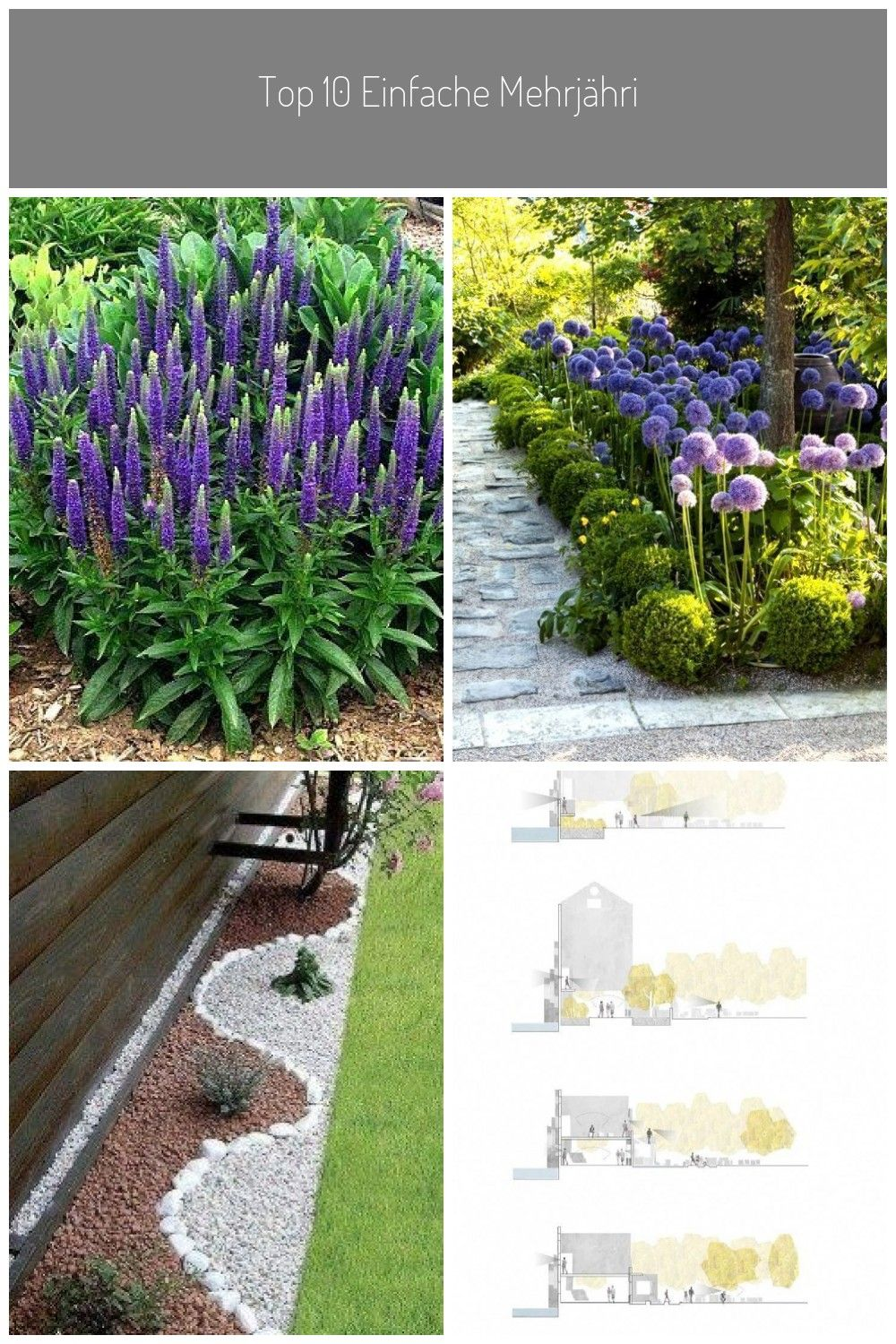 Top 10 simple perennial plants from seeds Veronica spicata ...