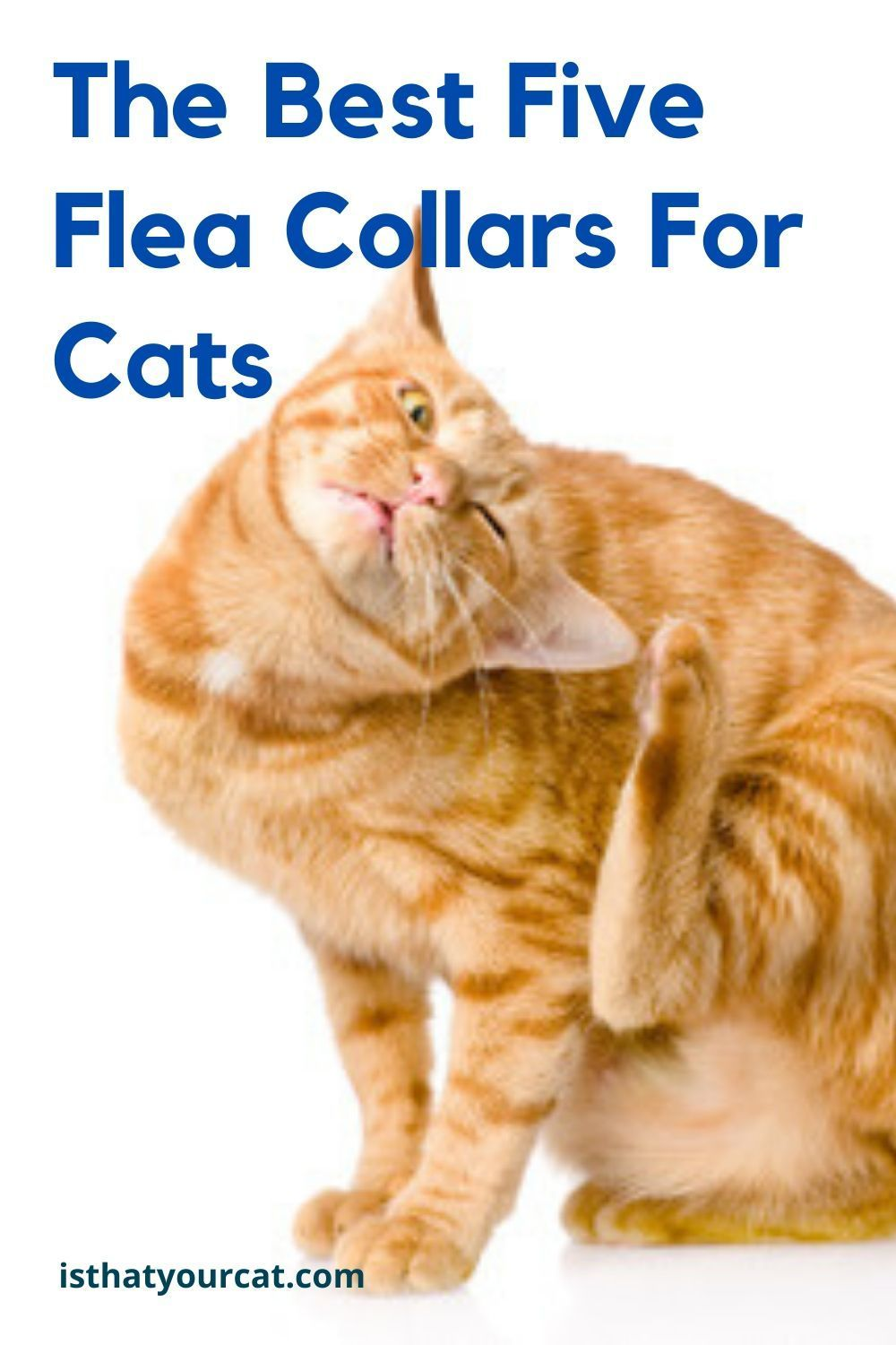 The Five Best Flea Collars For Cats In 2020 Flea Collar Cat Fleas Cat Flea Collar