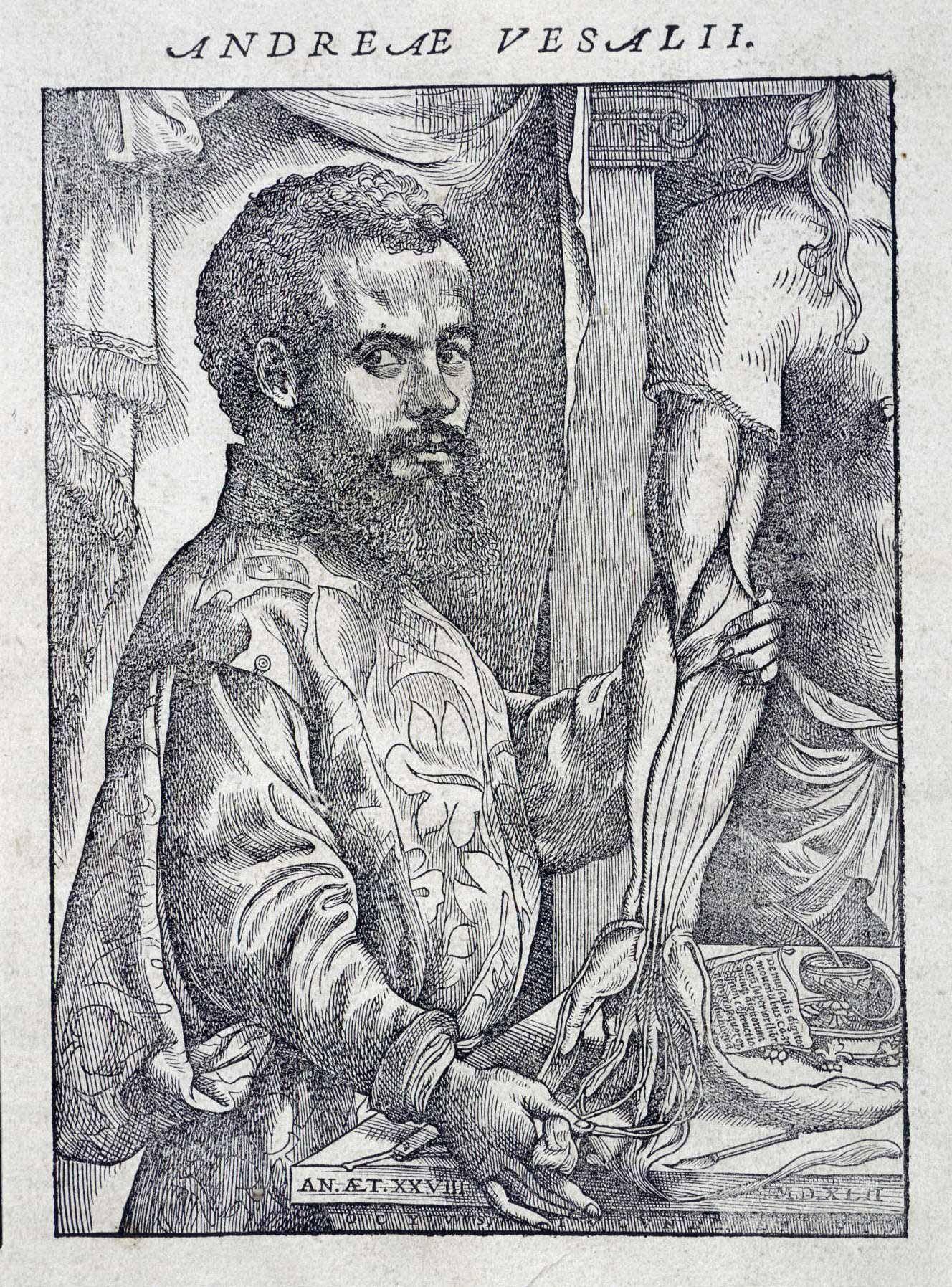 Vesalius\'s Anatomy - The British Library | Art and Spice ...
