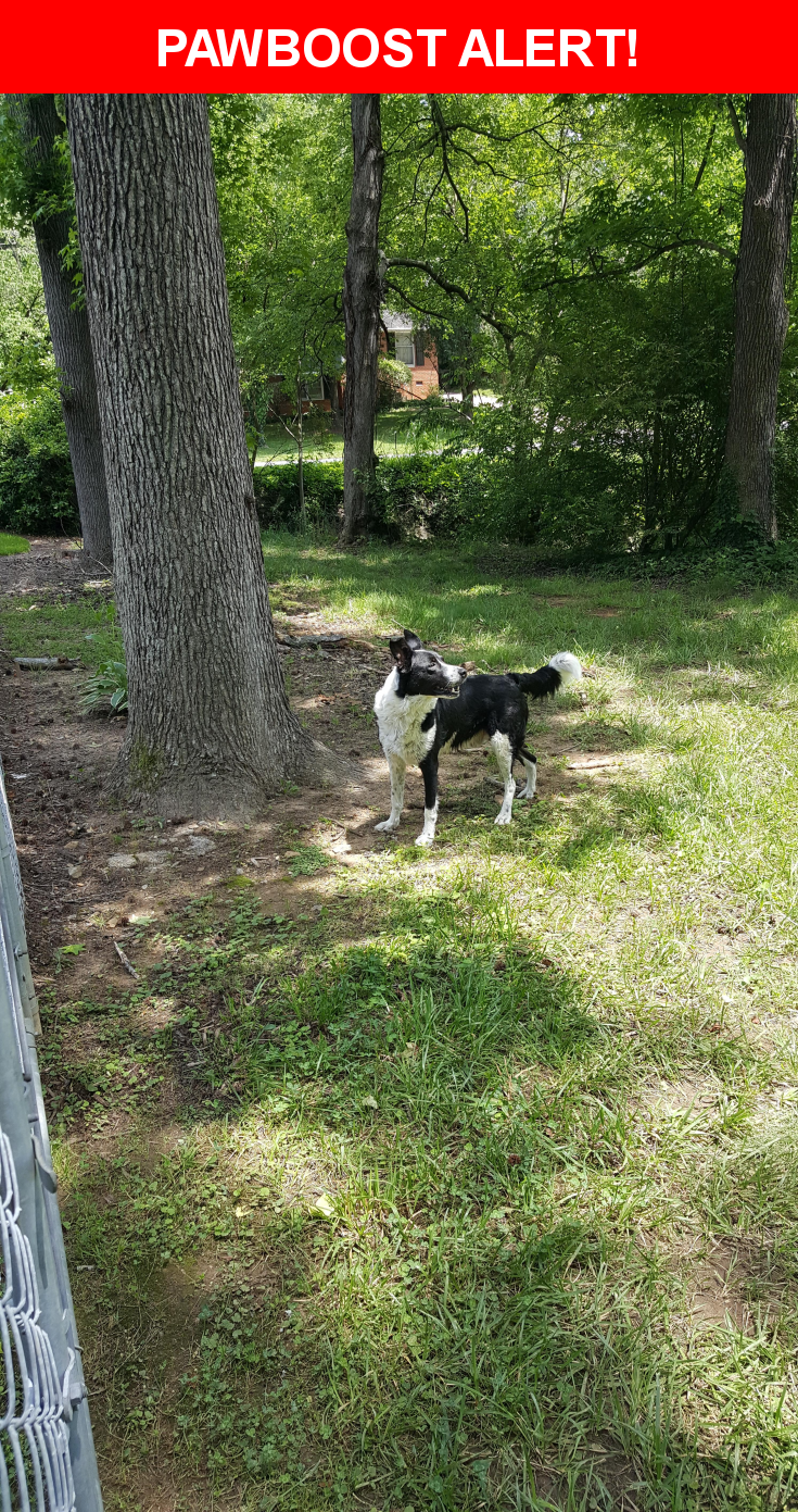 Is this your lost pet? Found in Greensboro, NC 27408  Please