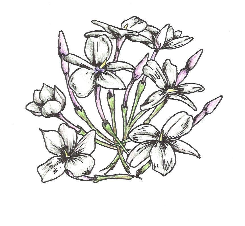 Jazmines Flores Dibujo Blog Diseno Grafico De Flor Dibujos Flores