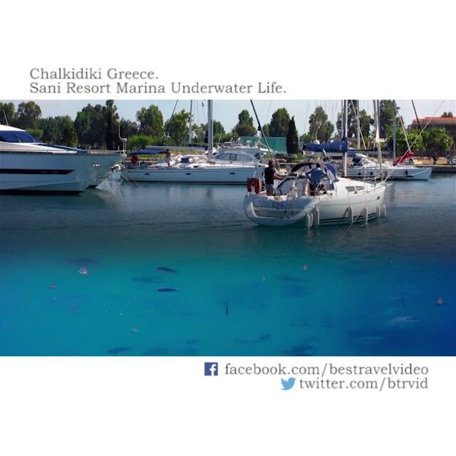 Sani resort marina underwater life Chalkidiki Greece.  Σάνη Χαλκιδική, η μαρίνα. For more travel news and videos follow twitter and facebook links in profile! #sani #saniresort #gopro #goprooftheday #diving #visitgreece #χαλκιδική #chalkidiki #halkidiki #underwater #underwaterphotography #халкидики #Греция #Отели Греции