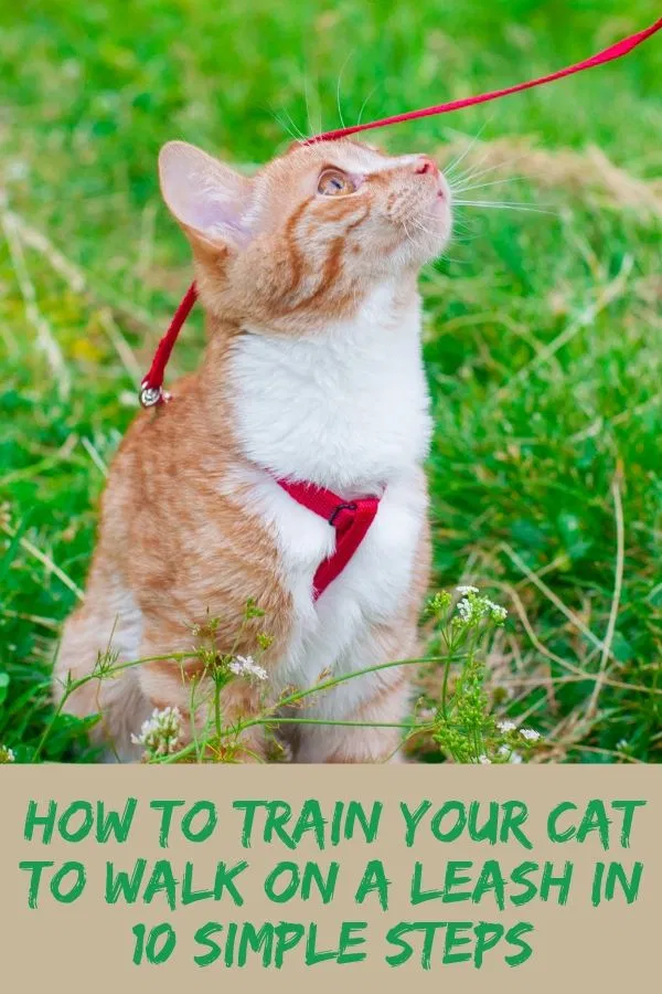 Looking For Information On How To Train Your Cat To Walk On A Leash Discover 10 Simple Steps To Leash Training Your Cat And The Be Cat Training Cat Leash Cats