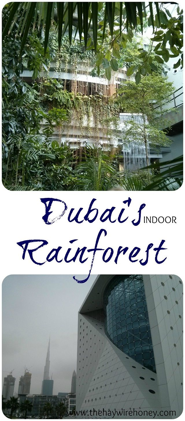 Dubai what to do . . . . . . Explore the Dubai Rainforest . . . . The Green Planet. Sightsee Dubai