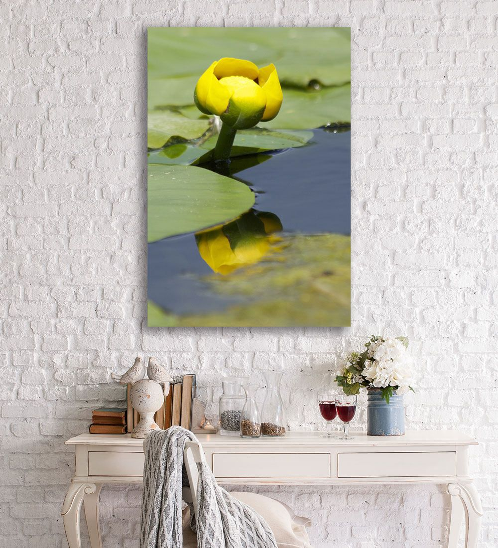 Water Lily And Lily Pads, Nature Photography, Flower Photography, Bathroom  Decor, Spa