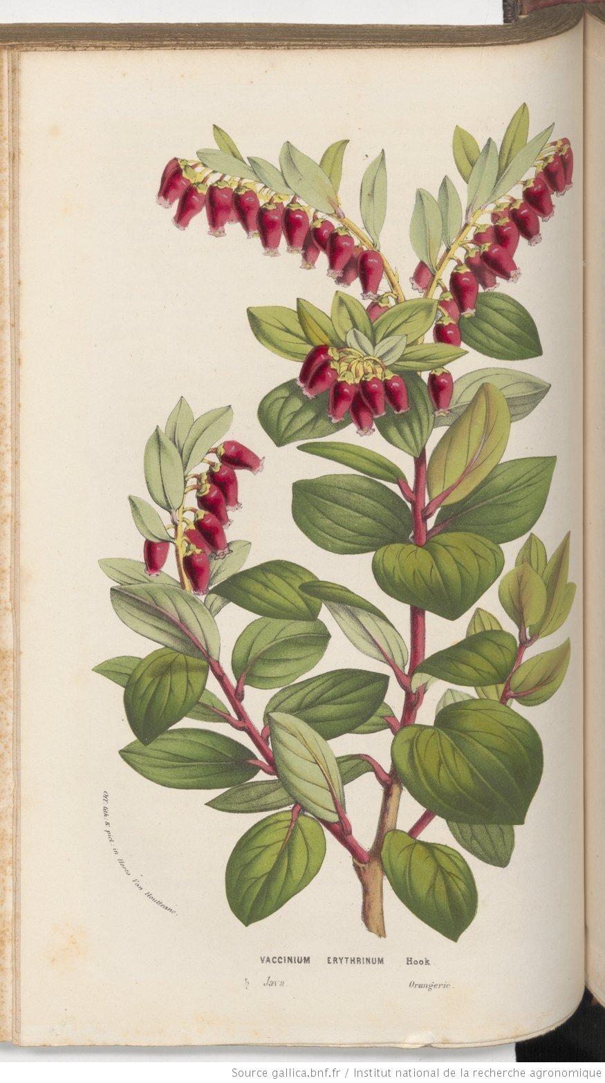 Botanical magazine, Botanical register, Paxton's magazine of botany, et rédigée par M. Ch. Lemaire,... M. Scheidweiler,... M. L. Van Houtte,...