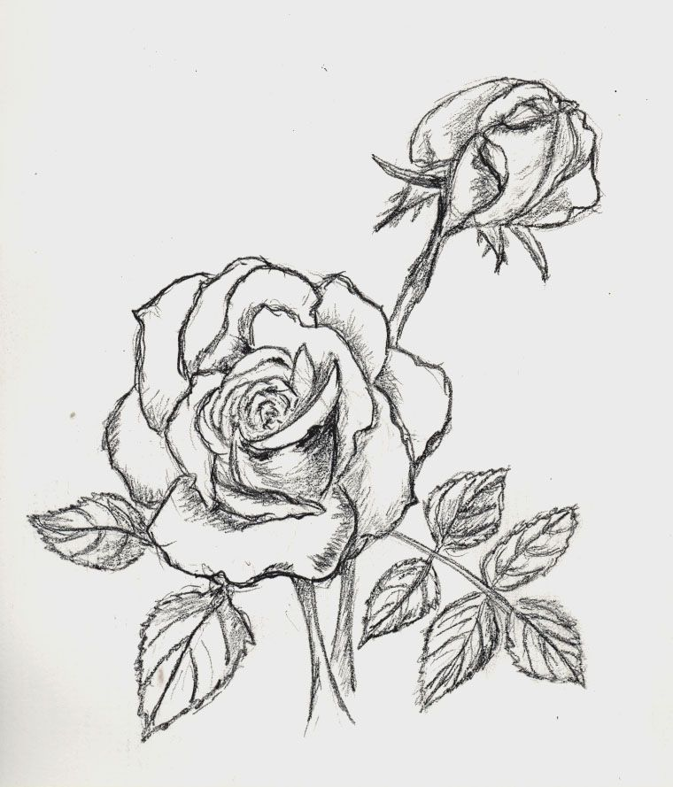 Flores Bonitas Para Pintar Mundo Imagenes Flores Dibujadas A