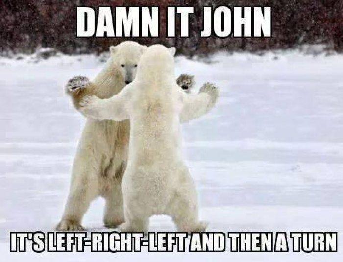 c9a35de8c2e6bfedb1b6df9ece94fb50 damn it john polarbear meme www jokideo com animals
