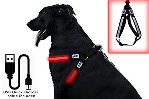 Jab Doggie Goodies Safety Led Usb Rechargeable Adjustable Dog