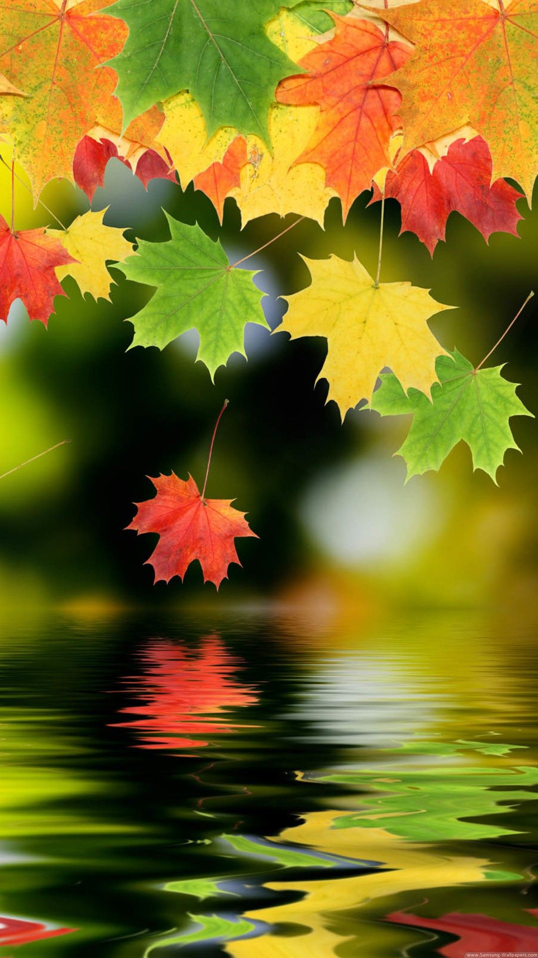 Colorful Autumn Maple Leafs Hd Android And Iphone Wallpaper Background And Lockscreen 4k Check More At Https Pho Fall Wallpaper Nature Wallpaper S5 Wallpaper