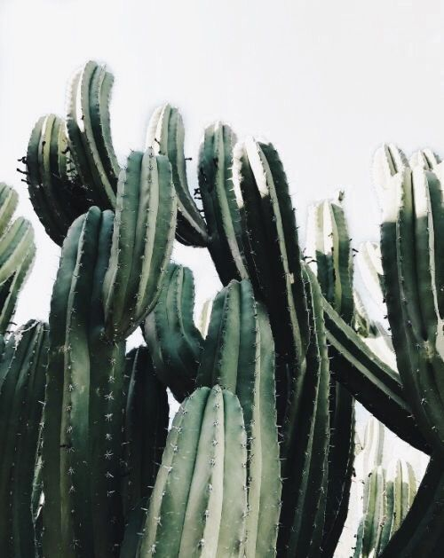 classy pictures of cactus house plants. 79 Awesome Indoor and Outdoor Cactus Garden Ideas Pin by Erica on This Succs  Pinterest Greenery Cacti Plants