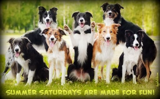 Pin By Christiane Monge On Louloutes Dog Breeds Border Collie