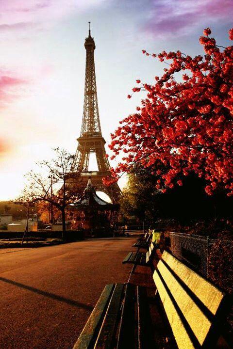 De Eiffeltoren in Parijs is een enorm grote gebouw. Het uitzicht van boven de Eiffeltoren is ook erg indrukwekkend. Maar de Eiffeltoren is het mooist wanneer de lichtjes in  de avond aan gaan.