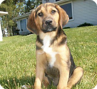 Bloodhound German Shepherd Dog Mix Pets Violet Pinterest
