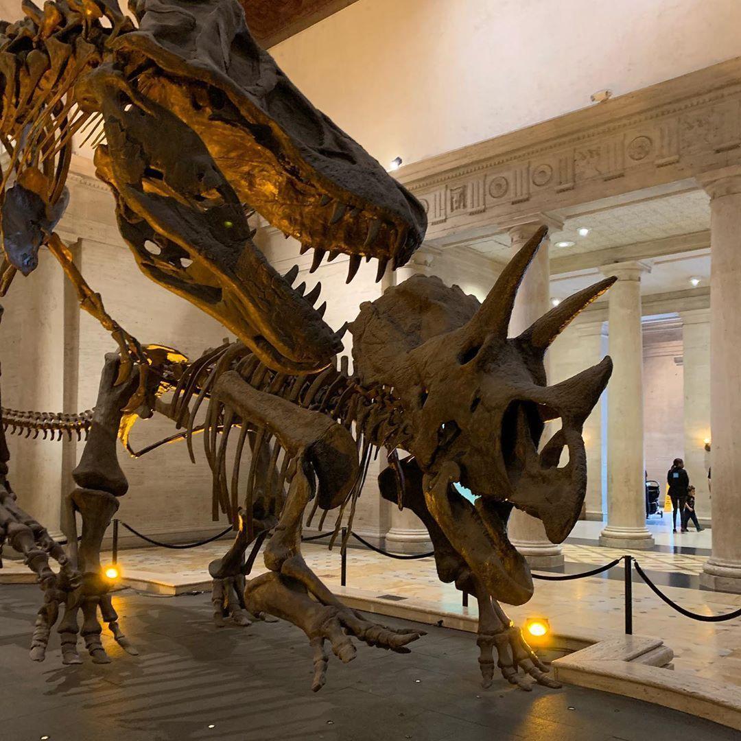 Natural History Museum  Natural History Museum #historyofdinosaurs Natural History Museum  Natural History Museum #historyofdinosaurs