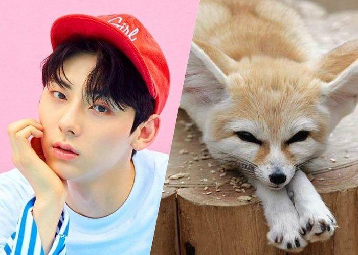 Male K Pop Idols Who Resemble Adorable Fennec Foxes Fox Fennec Fox Adorable