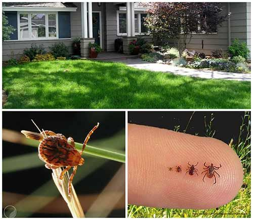 7 Awesome Ways To Tick Proof Your Yard Tick Repellent Garden Bugs