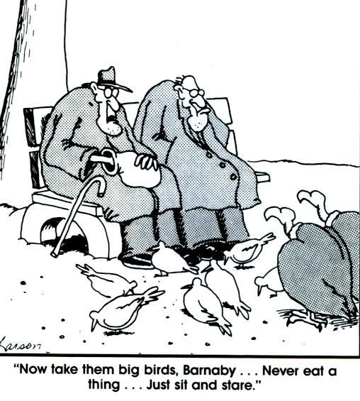 Image result for far side vultures patience