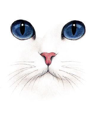 Cara De Gato Gatos Pinterest Gatos Arte Y Arte Pintura
