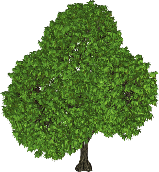 Green Tree Png Clipart Plants Green Trees Tree