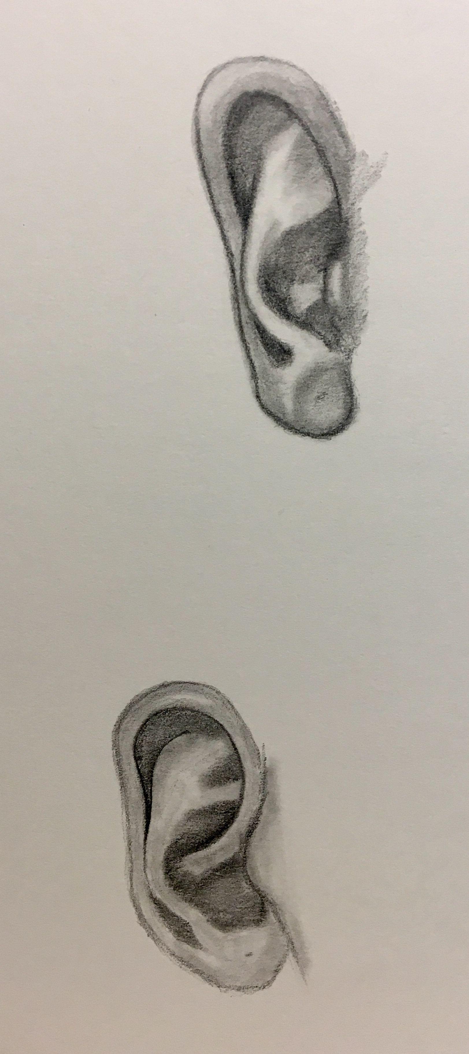 Tonal ear in pencil | Life drawing, Drawings, Gcse art