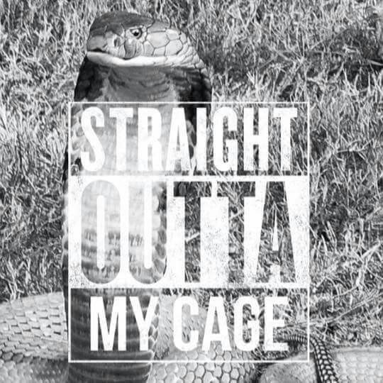 Straight outta my cage