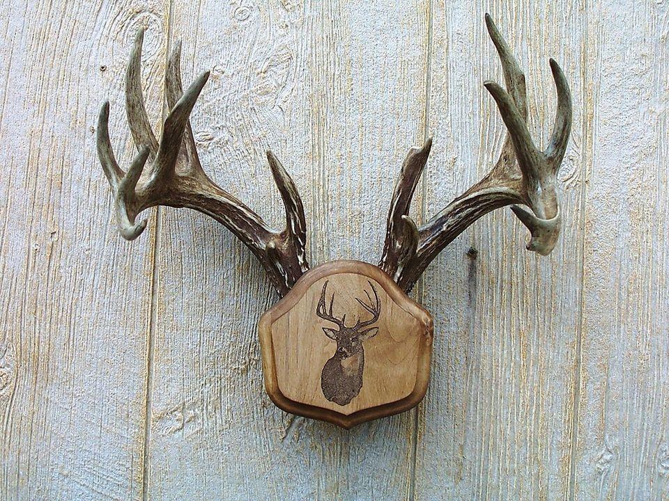 Rackheads Deer Buck Antler mounting plaque kit Moose /& Elk avai Works w// sheds