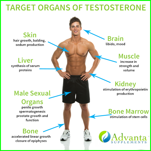Does sex raise or lower testosterone
